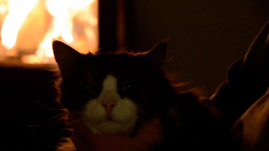 Väse ved katt framför kamin